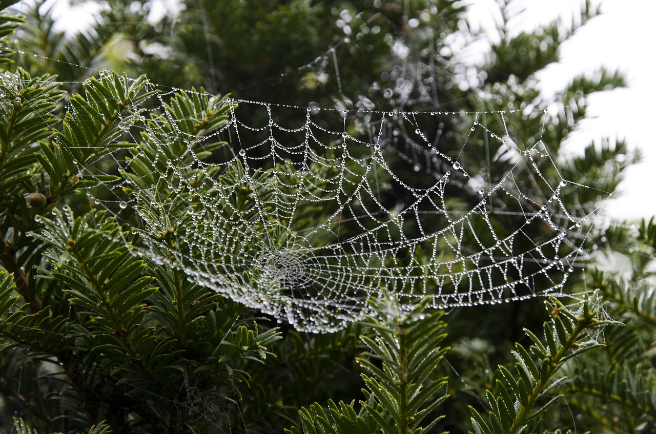 ukraine_spider-web