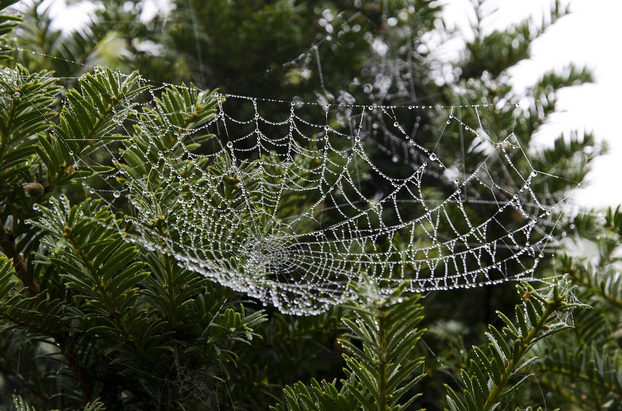 ukraine_spider-web